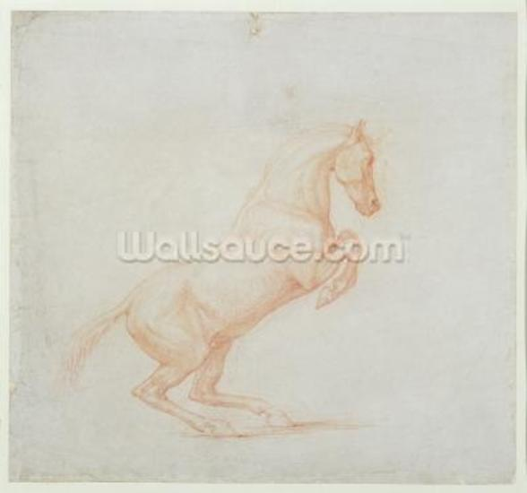 A Prancing Horse, facing right, 1790 (red chalk on paper) wall mural
