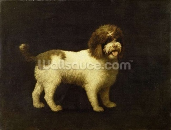 A Water Spaniel, 1769 (oil on canvas) wallpaper mural
