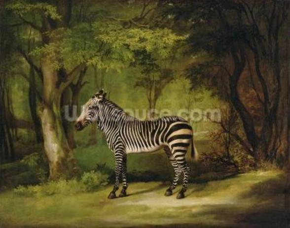 A Zebra, 1763 (oil on canvas) wall mural