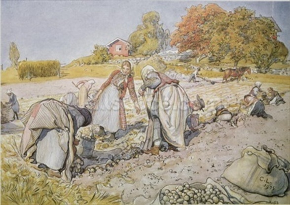 Digging Potatoes, 1905 wallpaper mural