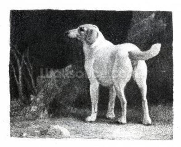 Dog, 1788 (engraving) mural wallpaper