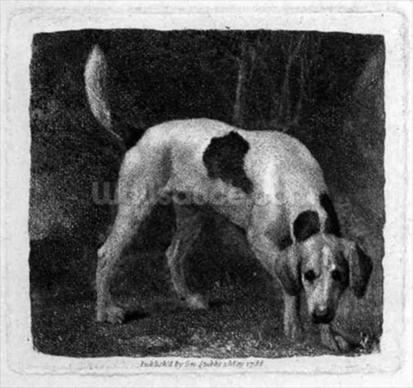 Dog (A Foxhound on the Scent) engraved by the artist, pub. 1788 (etching) mural wallpaper