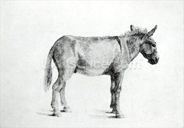 Donkey 1766 (pen and ink on paper) (b/w photo) wall mural