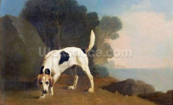 Foxhound on the Scent, c.1760 (oil on paper laid on board) wall mural