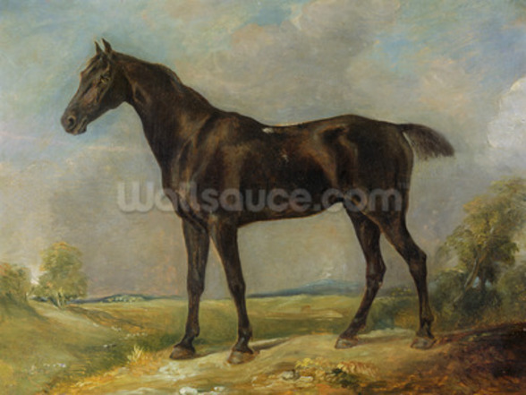 Golding Constables Black Riding-Horse, c.1805-10 (oil on panel) wall mural