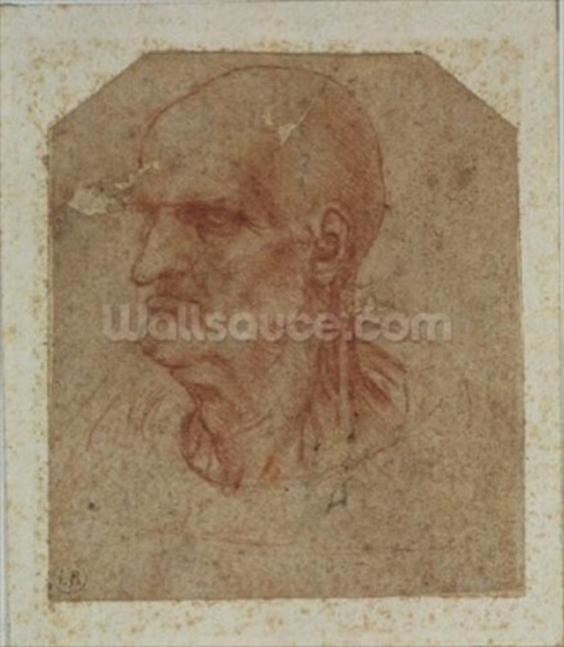Head of a beardless old man, left profile (red chalk on paper) wall mural