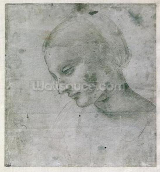 Head of a Young Woman or Head of the Virgin, c.1490 (silverpoint on paper) wall mural