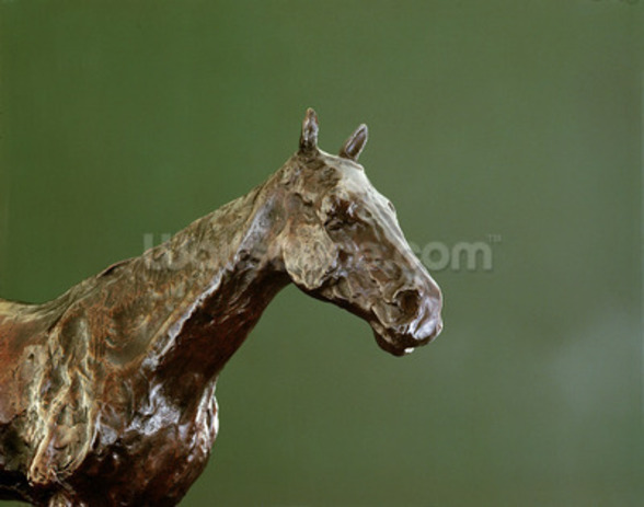 Horses Head (bronze) (detail of 335585) wall mural