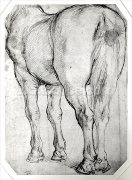 Horses Rear (pencil on paper) (b/w photo) wall mural