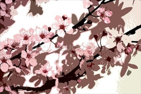 Japanese Blossom (colour photo) wallpaper mural
