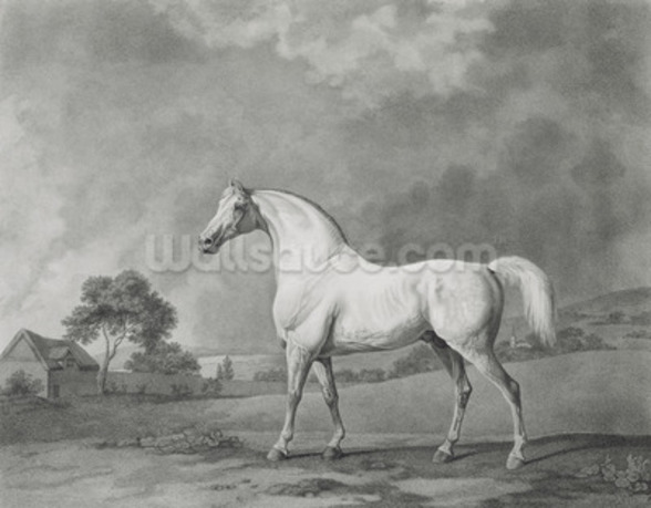 Mambrino, engraved by George Townley Stubbs (1756-1815) pub. 1794 (etching) wallpaper mural