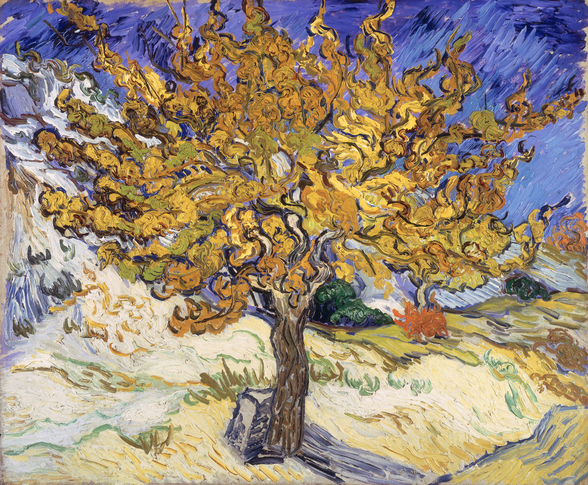 Mulberry Tree, 1889 (oil on canvas) wall mural