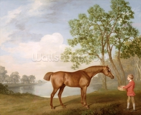 Pumpkin with a Stable-Lad, 1774 (oil on panel) wallpaper mural
