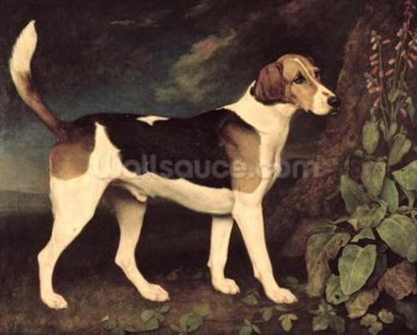 Ringwood, a Brocklesby Foxhound, 1792 (oil on canvas) wall mural