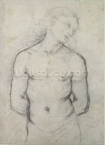 Saint Sebastian, 1499-1500 (black chalk on white paper) wall mural