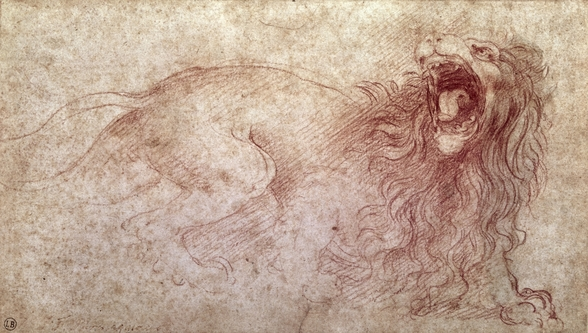 Sketch of a roaring lion (red chalk on paper) wall mural