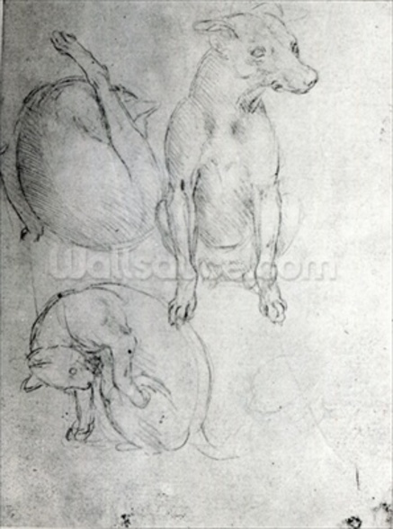 Study of a dog and a cat, c.1480 (metalpoint on paper) wallpaper mural