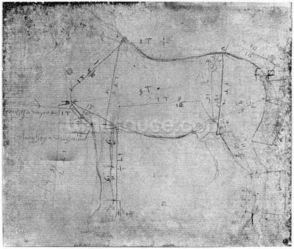 Study of a Horse (metal point on paper) (b/w photo) wall mural