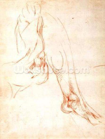 Study of a lower leg and foot (red chalk on paper) (recto) mural wallpaper