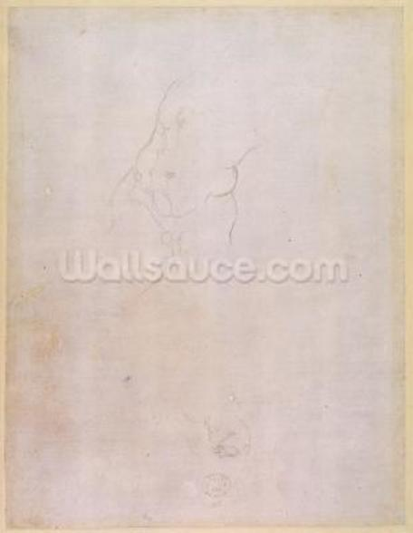 Study of a male torso (pencil on paper) (verso) (for recto see 192512) wallpaper mural
