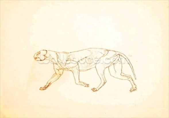 Study of a Tiger, Lateral View, from A Comparative Anatomical Exposition of the Structure of the Human Body with that of a Tiger and a Common Fowl, 1795-1806 (red chalk graphite on wove paper) wallpaper mural