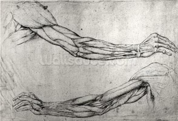 Study of Arms (pen & ink on paper) wall mural