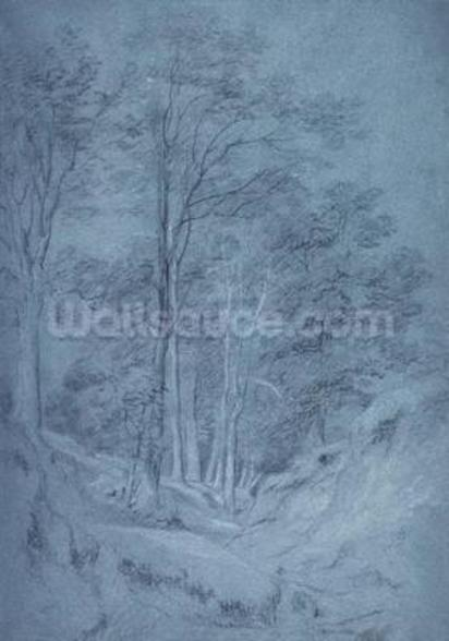 Study of ash and other trees (pencil on paper, heightened with white chalk) wall mural