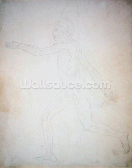 Study of the Human Figure, Lateral View, A Comparative Anatomical Exposition of the Structure of the Human Body with that of a Tiger and a Common Fowl, c.1795-1806 (graphite on cartridge paper) wallpaper mural