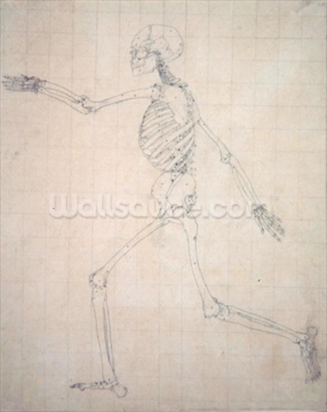 Study of the Human Figure, Lateral View, finished study for Table III, from A Comparative Anatomical Exposition of the Structure of the Human Body with that of a Tiger and a Common Fowl, 1795-1806 (graphite on thin wove paper) mural wallpaper