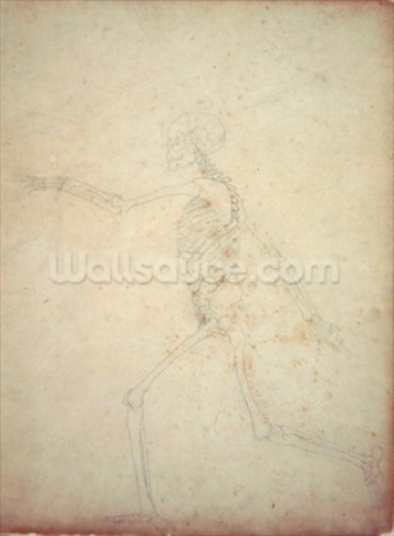 Study of the Human Figure, Lateral View, from A Comparative Anatomical Exposition of the Structure of the Human Body with that of a Tiger and a Common Fowl, 1795-1806 (graphite and red chalk on thin wove paper) wall mural