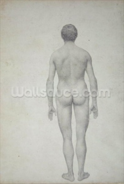 Study of the Human Figure, Posterior View, Undissected, Finished Study for Table VII, from A Comparative Anatomical Exposition of the Structure of the Human Body with that of a Tiger and a Common Fowl, 1795-1806 (graphite on heavy wove paper) mural wallpaper