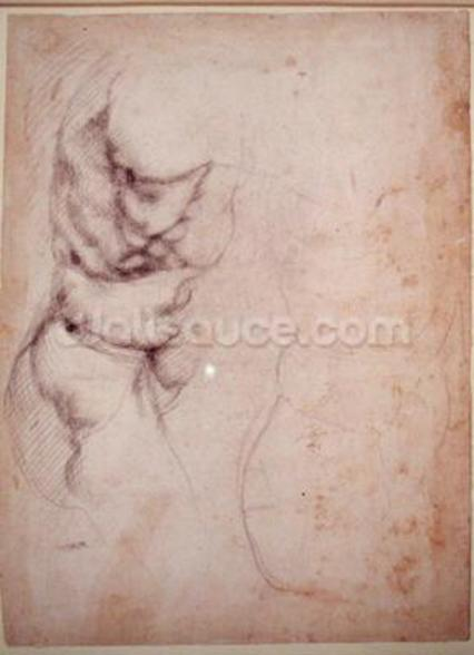 Study of torso and buttock (charcoal on paper) (recto) wall mural