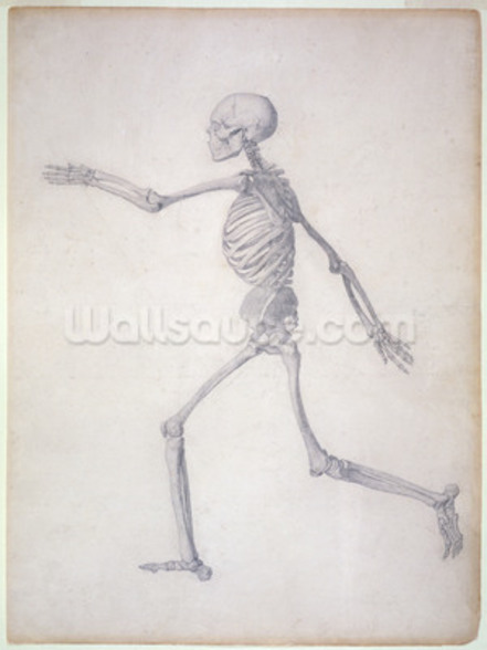 The Human Skeleton, lateral view, from the series A Comparative Anatomical Exposition of the Structure of the Human Body with that of a Tiger and a Common Fowl, 1795-1806 (graphite on paper) mural wallpaper