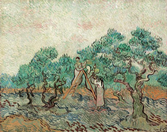 The Olive Grove, 1889 (oil on canvas) wallpaper mural
