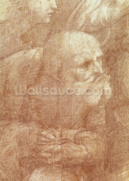 The School of Athens, detail of the cartoon depicting an elderly man, c.1510 (charcoal & white lead on paper) wall mural