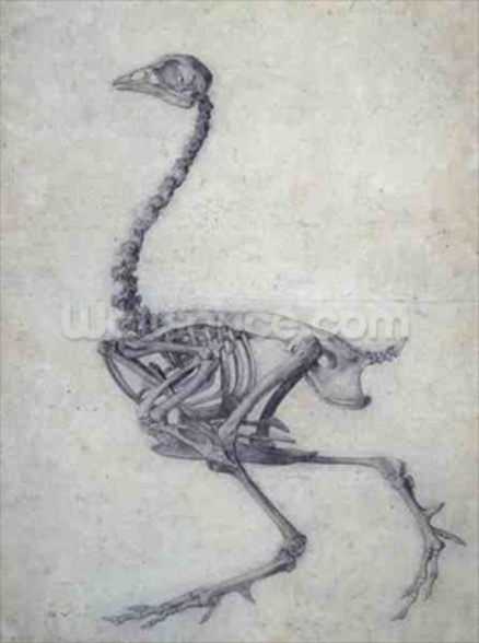 The Skeleton of a Fowl, from the series A Comparative Anatomical Exposition of the Structure of the Human Body with that of a Tiger and a Common Fowl, 1795-1806 (graphite on paper) wall mural