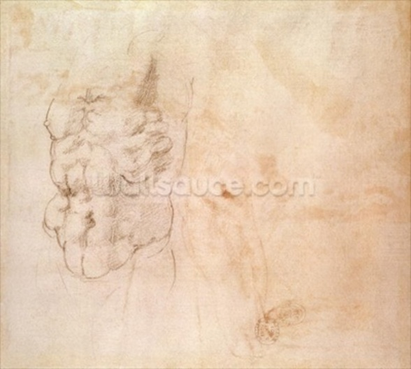 Torso Study (red & black chalk on paper) wallpaper mural