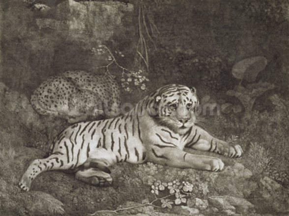 Two Tygers, engraved by the artist, pub. 1788 (etching) wallpaper mural