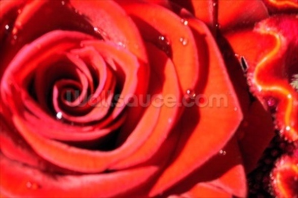 Valentines (colour photo) wallpaper mural
