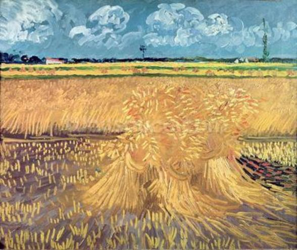 Wheatfield with Sheaves, 1888 (oil on canvas) mural wallpaper