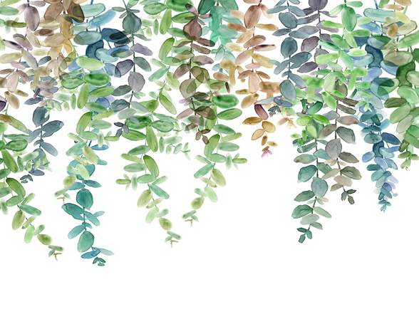 Hanging Eucalyptus mural wallpaper
