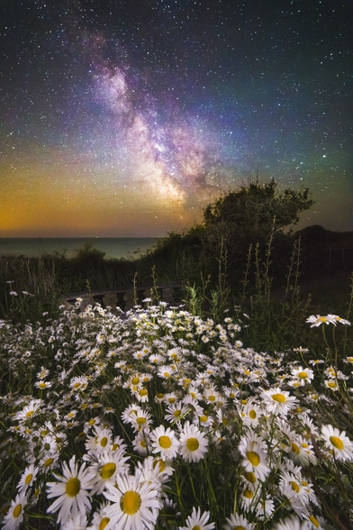 Daisies Under A Starlit Sky wall mural