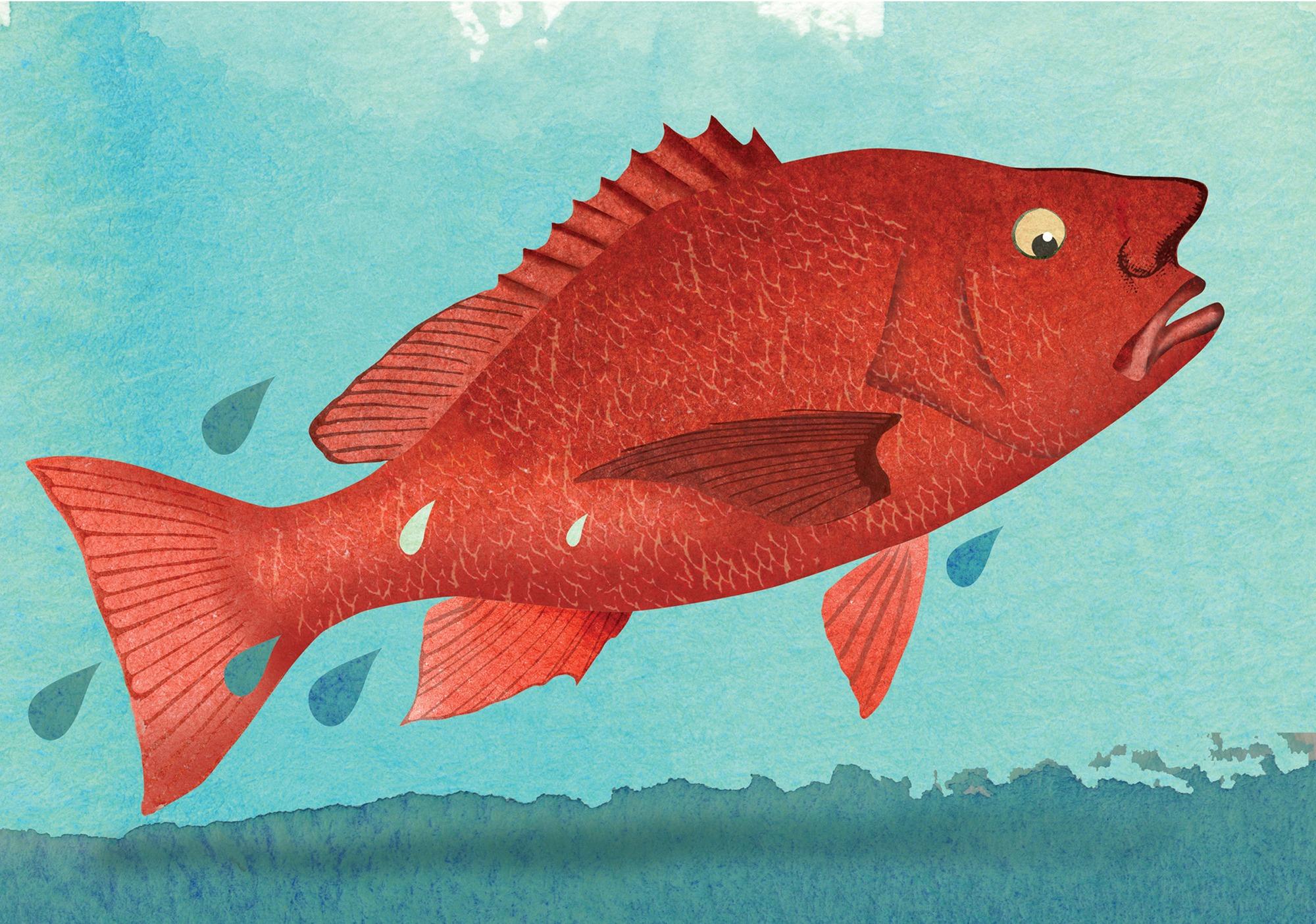 fish fear wall mural fish fear wallpaper diving coral fish wall mural muralswallpaper co uk