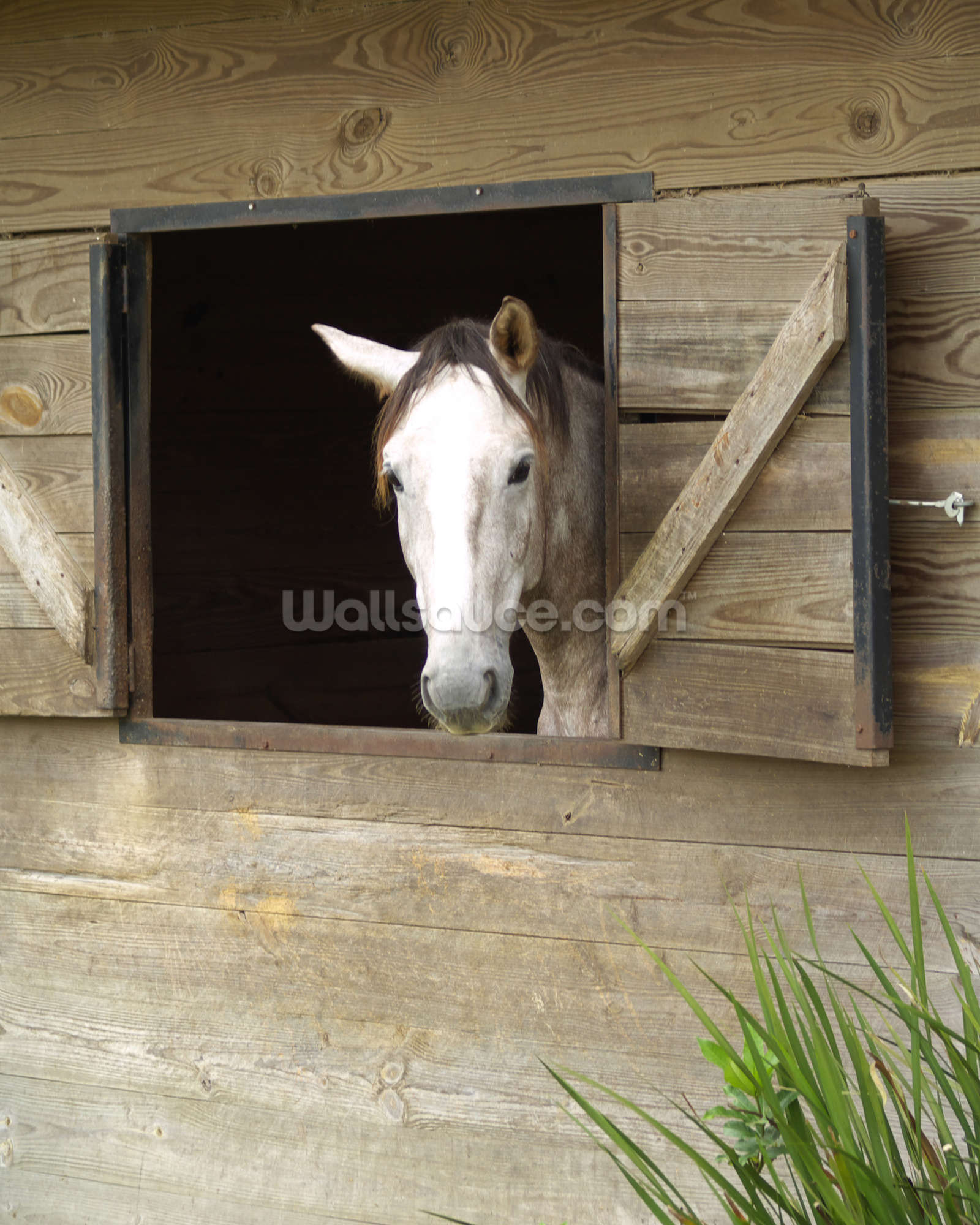 Stabled horse wallpaper wall mural wallsauce australia for Equestrian wall mural