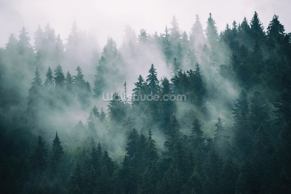 Smokey Misted Forest