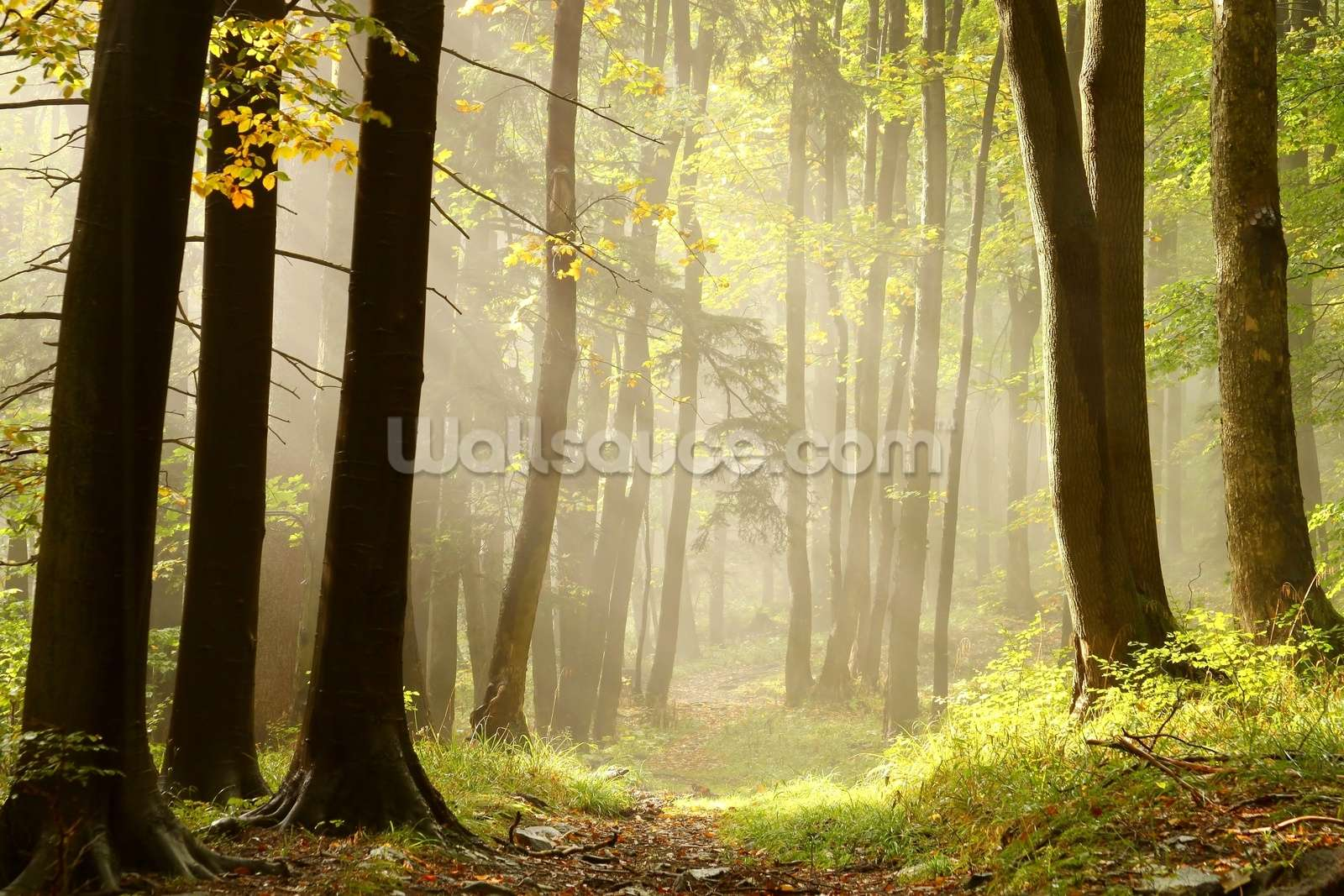 forest wall murals wallpaper home design ideas forest pathway wall mural photo wallpaper