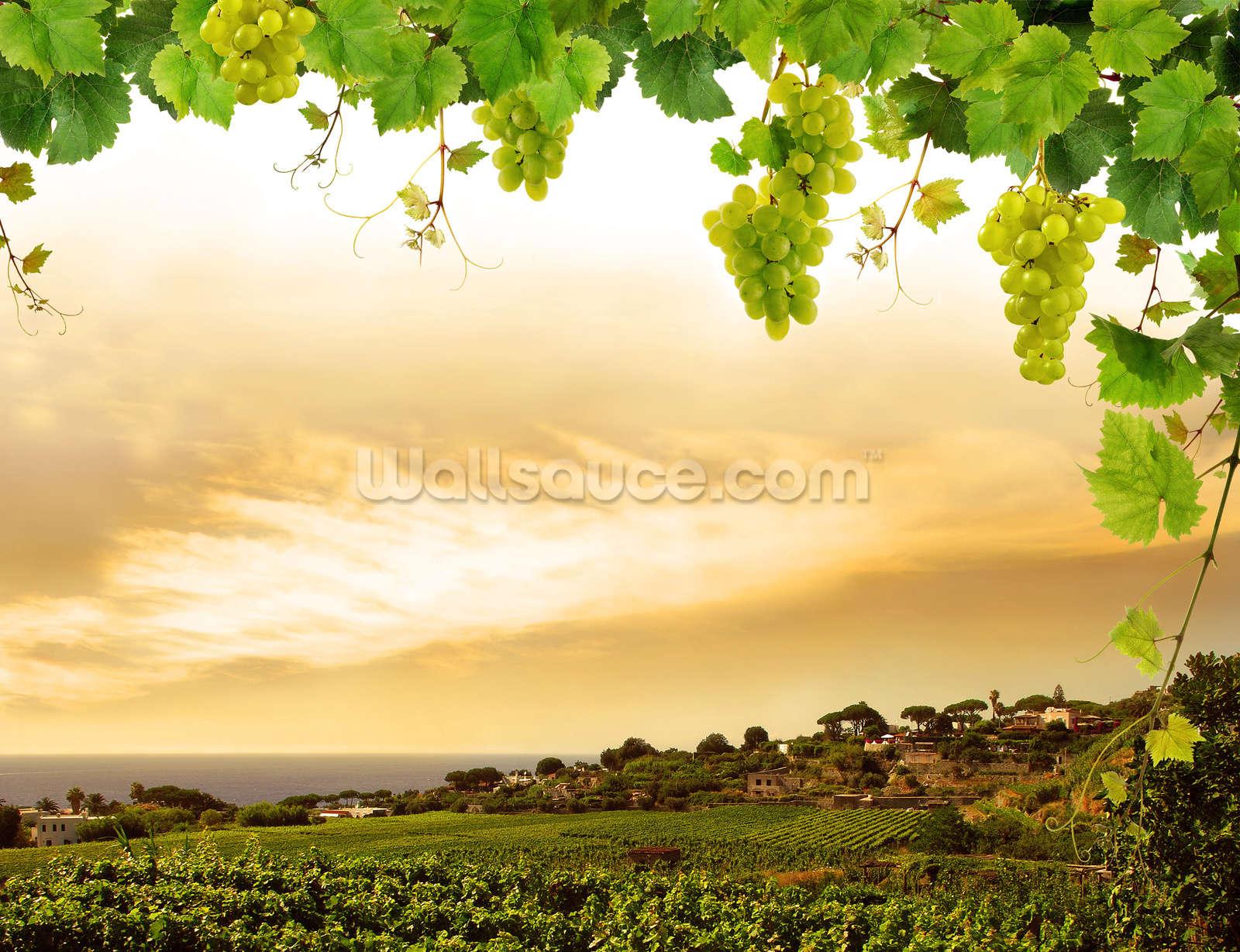 Vineyard Wallpaper Mural