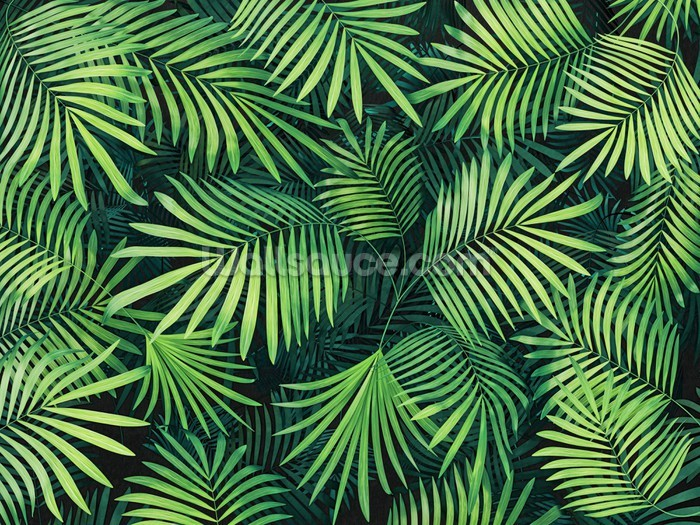 Leaves Of Palm Tree Wallpaper Wall Mural Photo