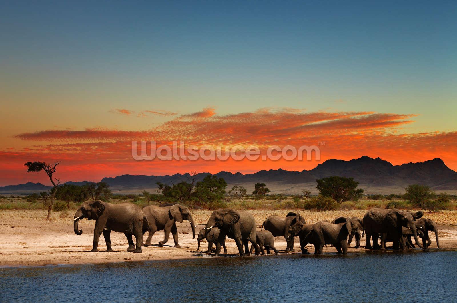 African Elephants Wallpaper Wall Mural Wallsauce UK