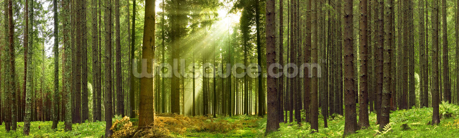 panoramic woodland wallpaper mural wallsauce uspanoramic woodland wallpaper mural